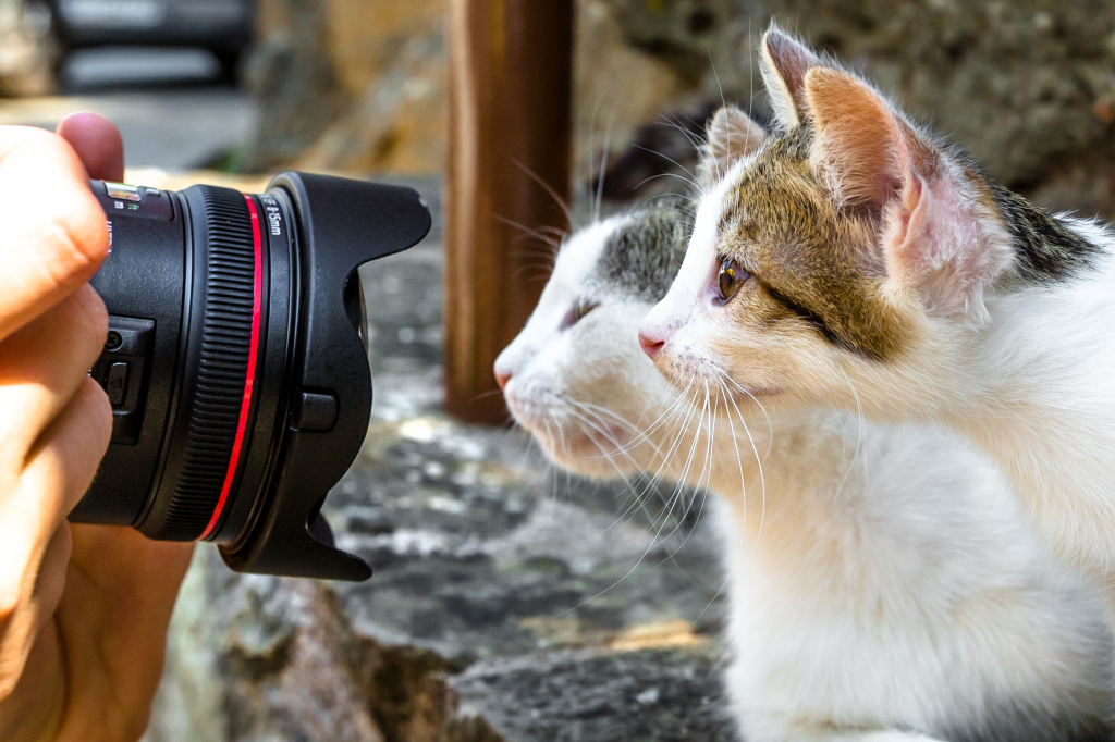 zwei Kätzchen vor einem Kameraobjektiv