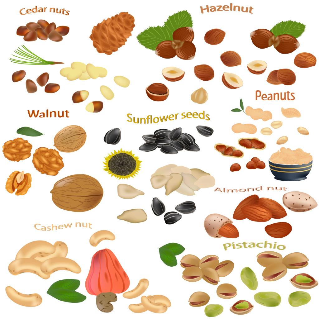 Grafik mit Nüssen, Kernen und Saaten