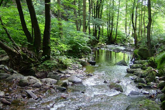 Wasserverlauf