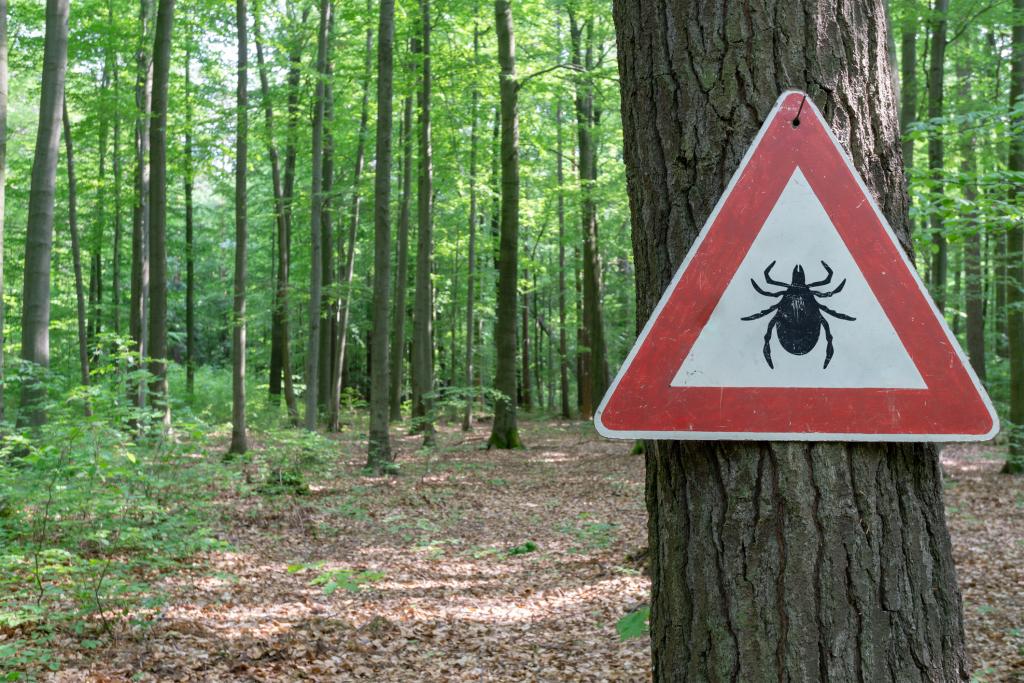 Zecken-Warnschild in einem Wald