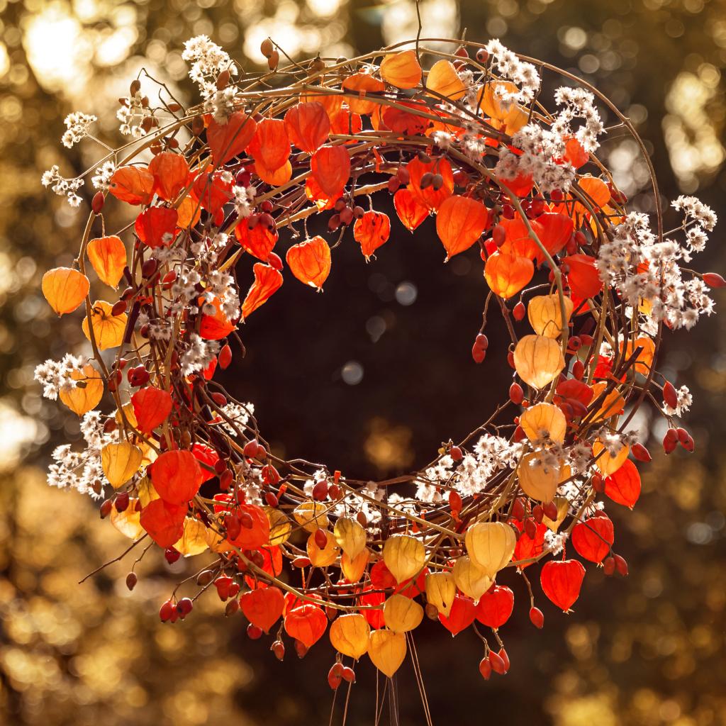Kranz aus Lampionblumen