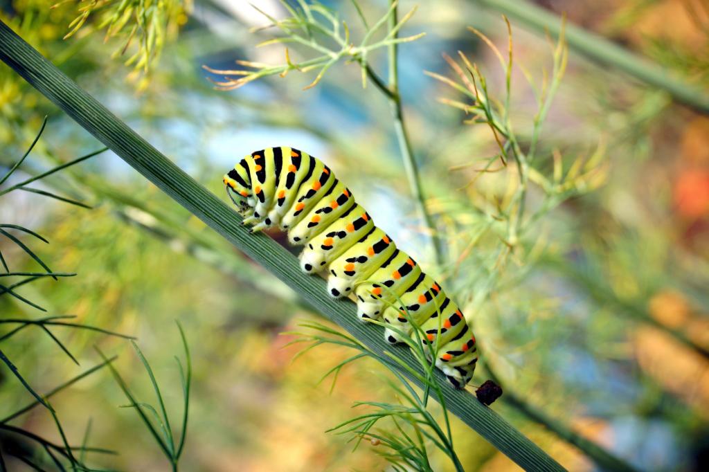 Schmetterlingsraupe in Nahaufnahme
