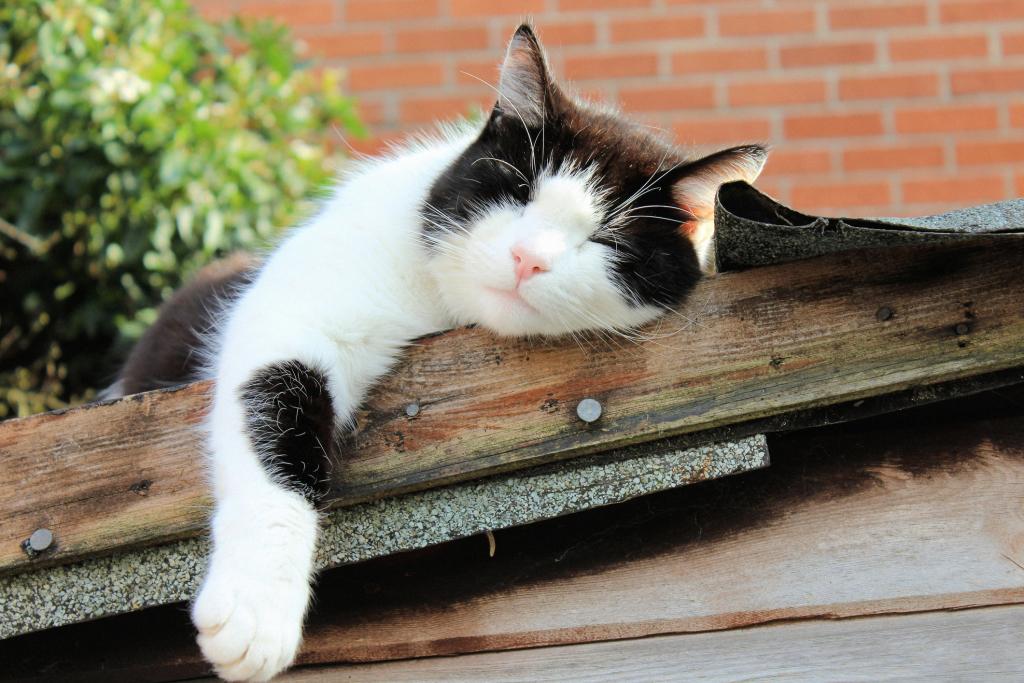 schlafende Katze auf einem Dach
