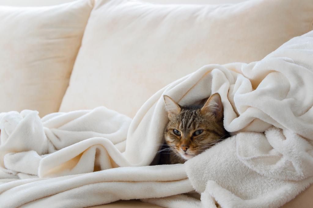 Katze in einer Decke