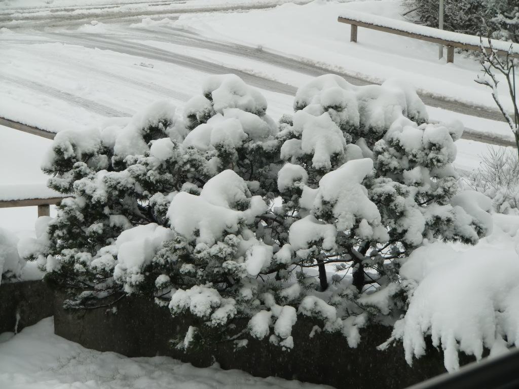 cimg745 - Winter