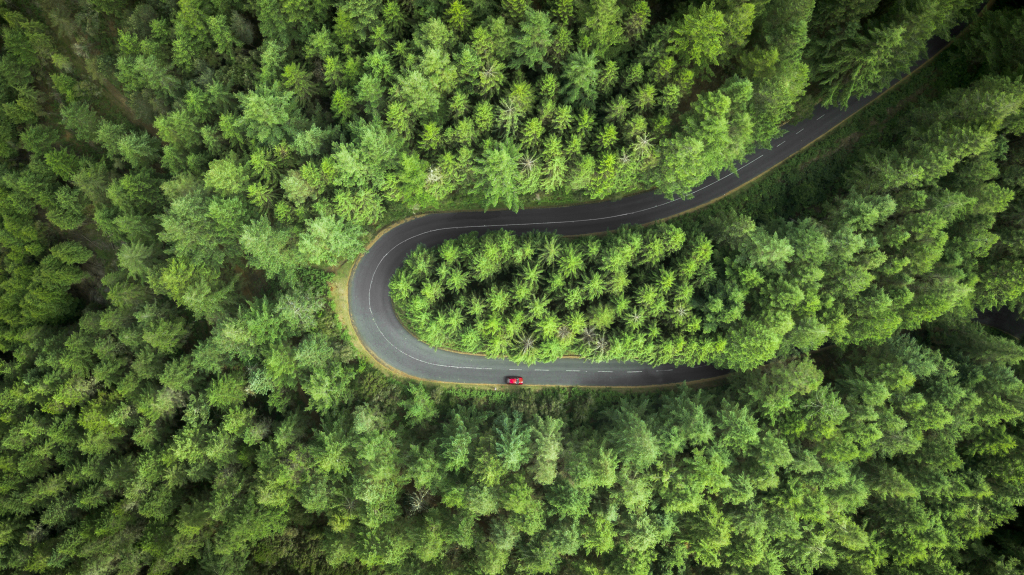 Ein um die Kurve fahrendes Auto im Wald