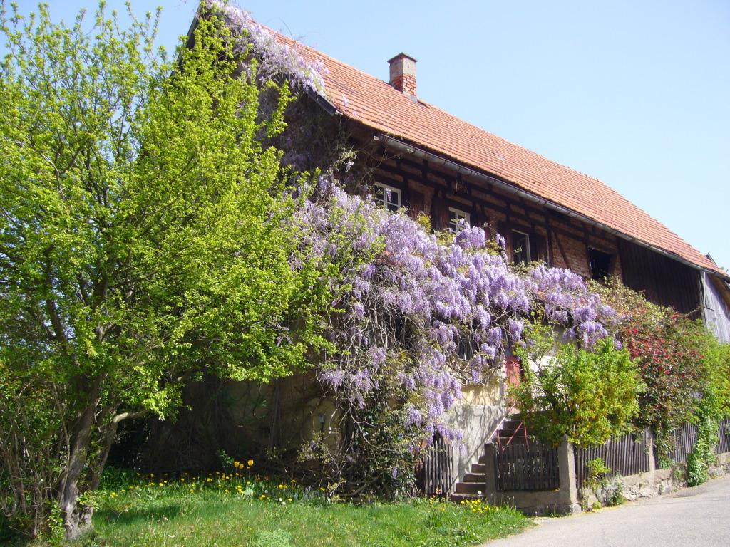 Haus mit Baum davor