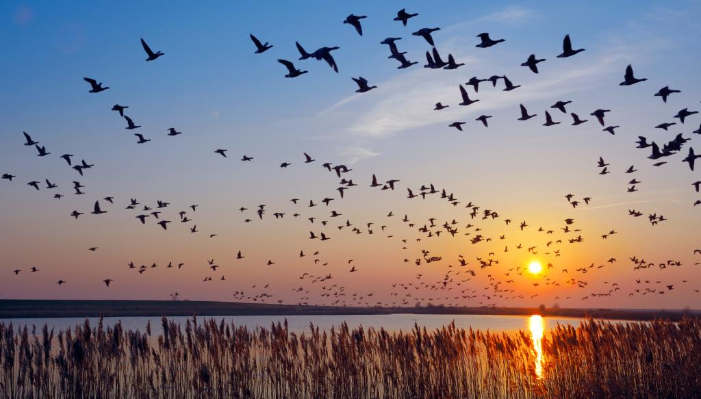 Zugvögel an einem See im Abendlicht