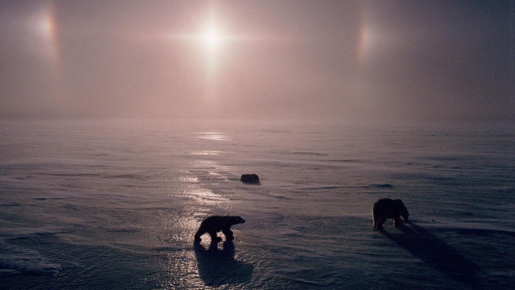 Eisbären in Kanada