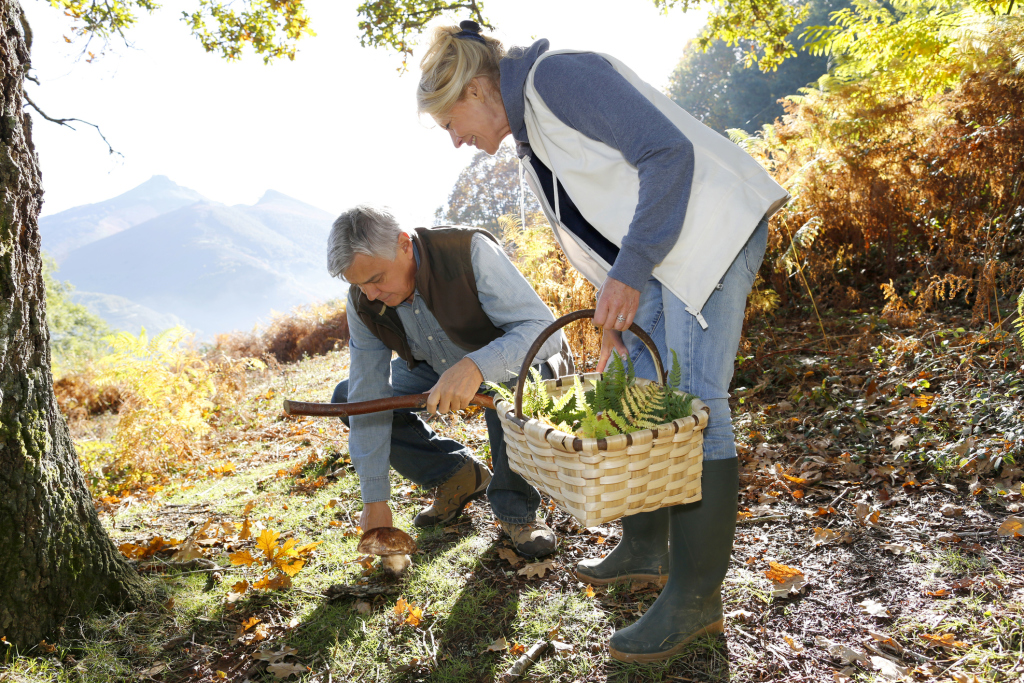 Zwei ältere Frauen beim Pilzesammeln
