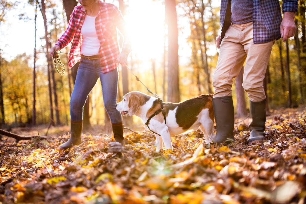 Paar mit Hund im herbstlichen Wald