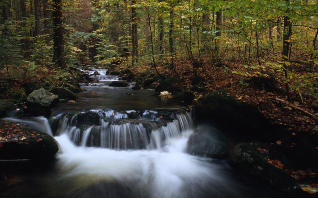 National Park Bayerischer Wald