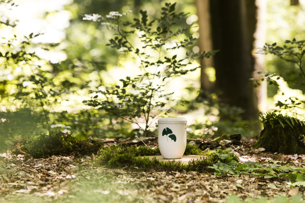 Wald in einem Friedwald