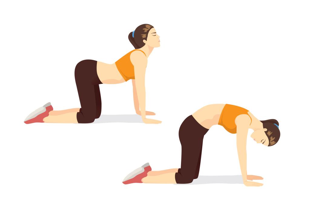 Illustration Katze-Kuh-Yoga-Übung