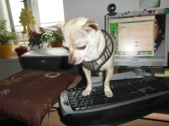 Maxi am PC