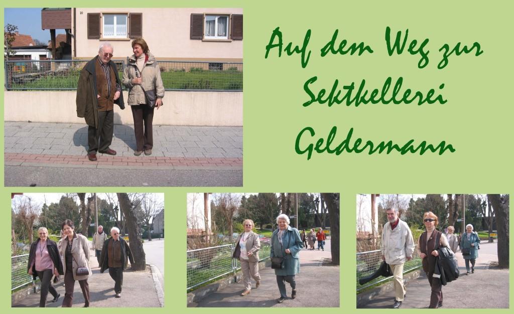 Geldermann 7