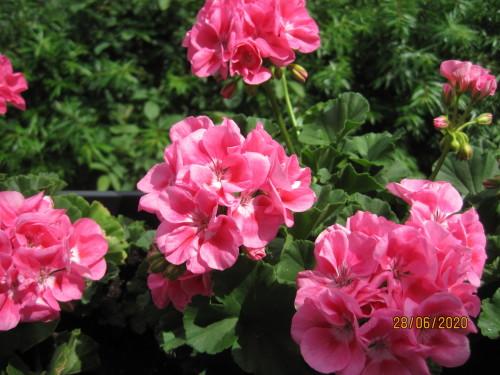 Blumen 005.JPG