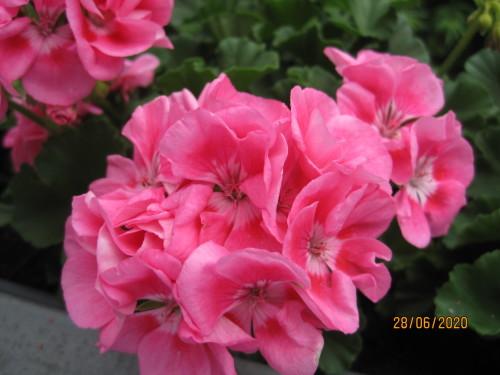 Blumen 007.JPG