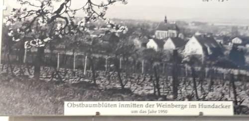 Heimatmuseum_Rose56
