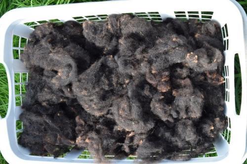 gewaschene Rohwolle direkt vom Schäfer