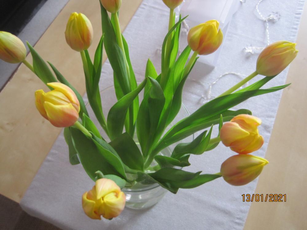 Tulpen 009.JPG