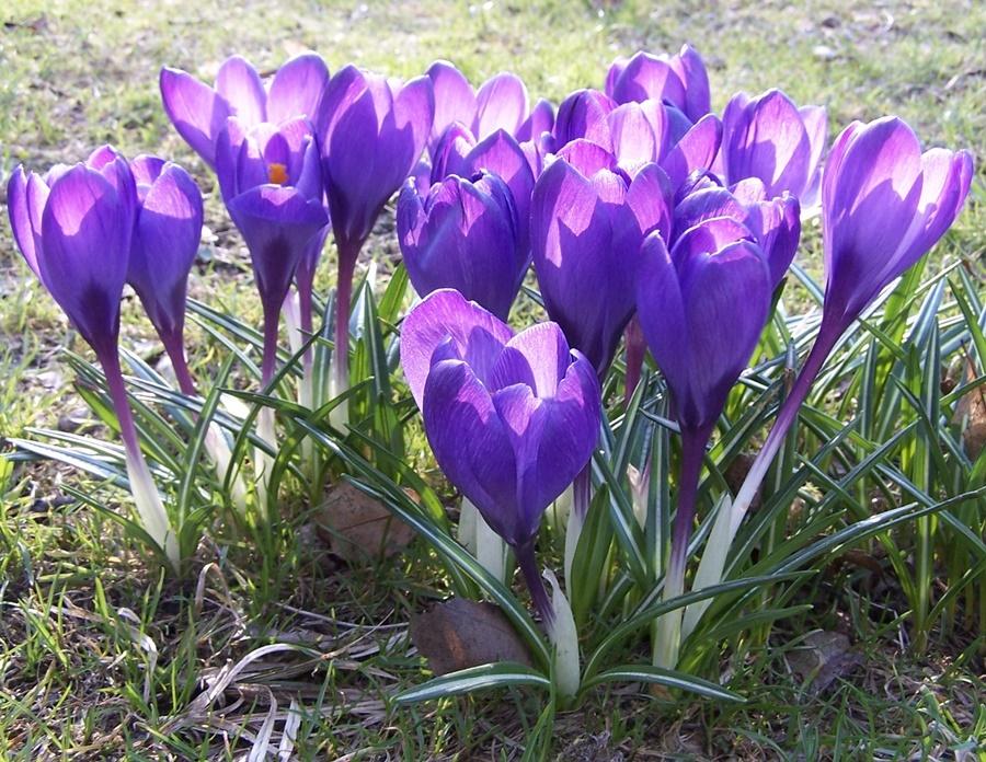 Frühlingsblüher - Kopie.jpg