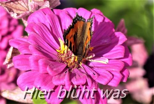 Schmetterlingspause.jpg