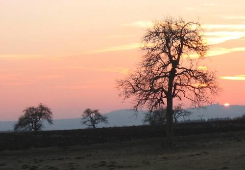 Nussbaum im Winter