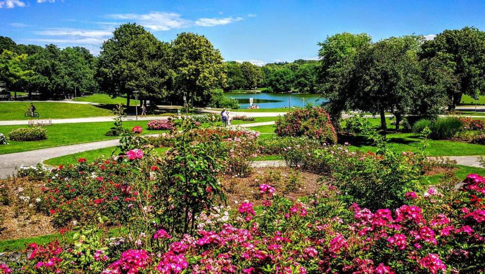 Rosengarten im Westpark.jpg