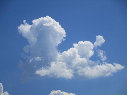 IMG_0569.JPG  Der wolkenhund