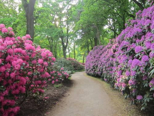 Rhododendronpark Frühling 2018.JPG