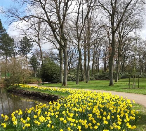 Rhododenronpark Frühling 2019.jpg