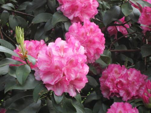 Herrliche Blütenpracht.JPG