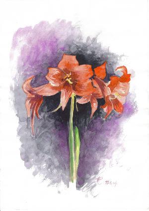 Blume Hanni