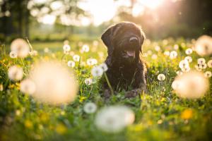 Hundeporträt auf Wiese