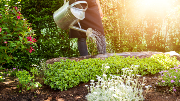 Pflanzen im Garten gießen