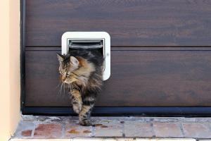 Katze kommt aus einer Katzenklappe