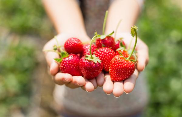 Zwei Handvoll Erdbeeren