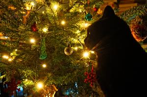 Morlie unterm Weihnachtsbaum