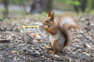Eichhörnchen vor einem Einkaufswagen mit Walnüssen