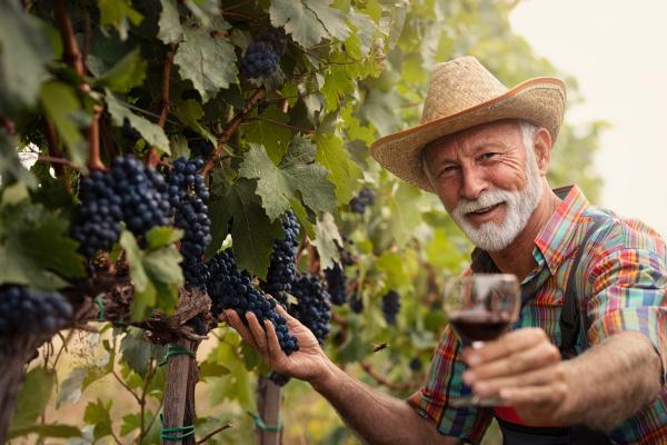 Senior mit Weinglas im Weinberg