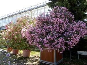 botanischersommer