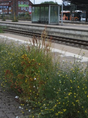 w50_Bahnsteig.JPG