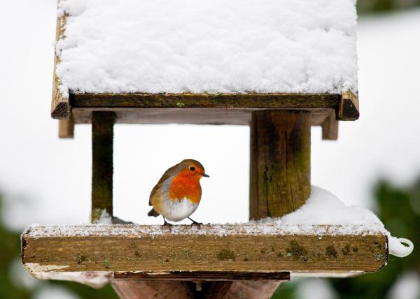 Vogelfütterung - Rotkehlchen in Vogelhaus