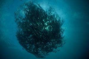 Fischstrudel
