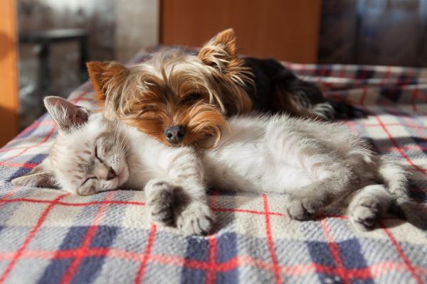 Hund und Katze schauen unter Decke hervor