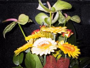 Blumen josef
