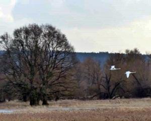 Es ist still romantisch im Nationalpark Unteres Odertal
