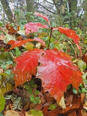 Einzelne bunte Blätter findet man noch