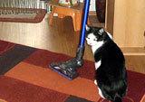 Katze mit Staubsauger auf einem Teppich © Mitglied